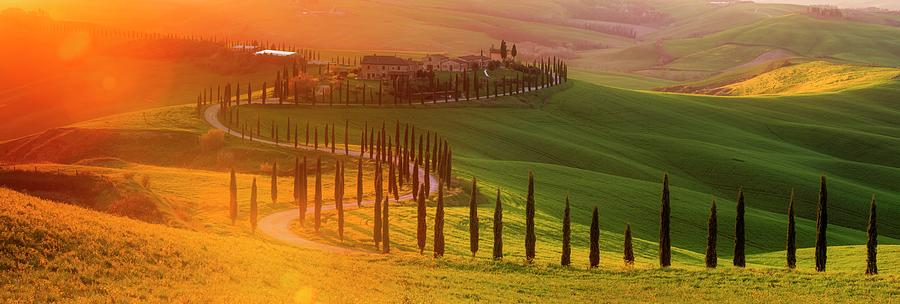 Golden Tuscany II by Rob Davies