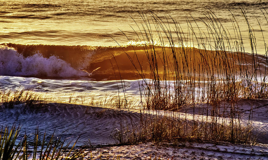 Golden Tybee Island Sunrise 2 Seagull And Atlantic Ocean Wave At Tybee Island Beach Georgia