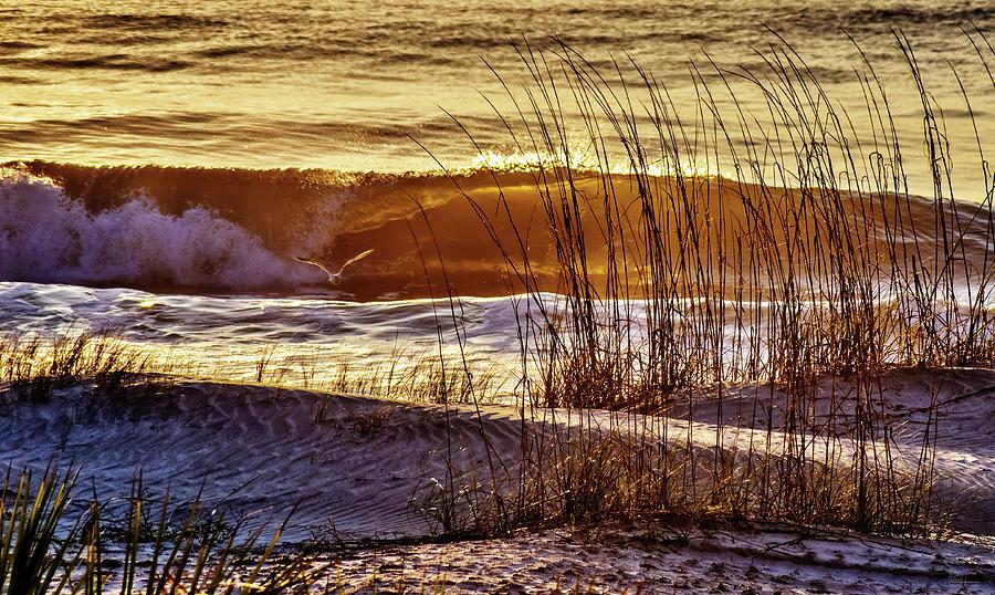 Golden Tybee Island Sunrise #2- Seagull and Atlantic ocean wave at Tybee Island Beach Georgia by Peter Herman