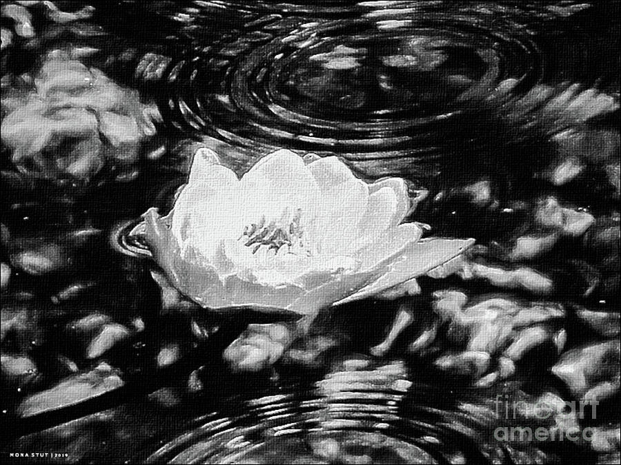 Golden Water Lily Pond Ripples Bw Photograph