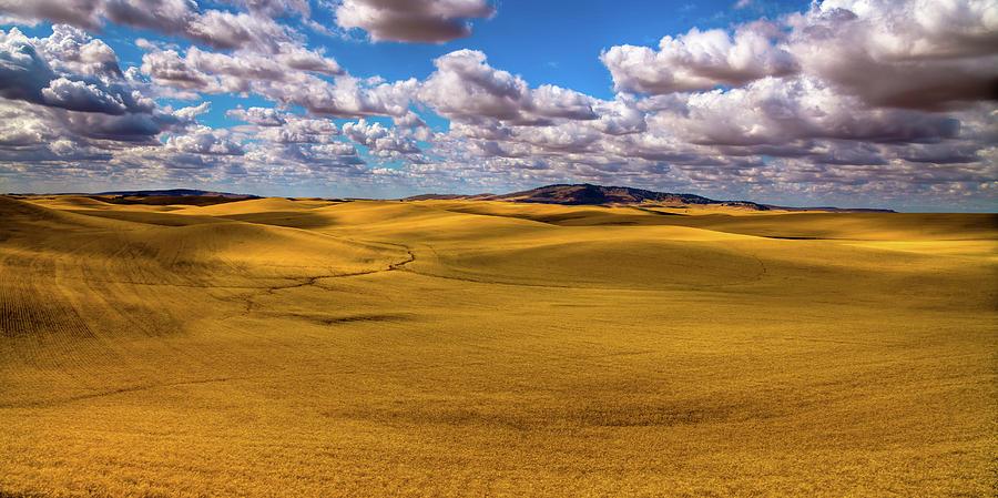Golden Wheat Fields by David Patterson