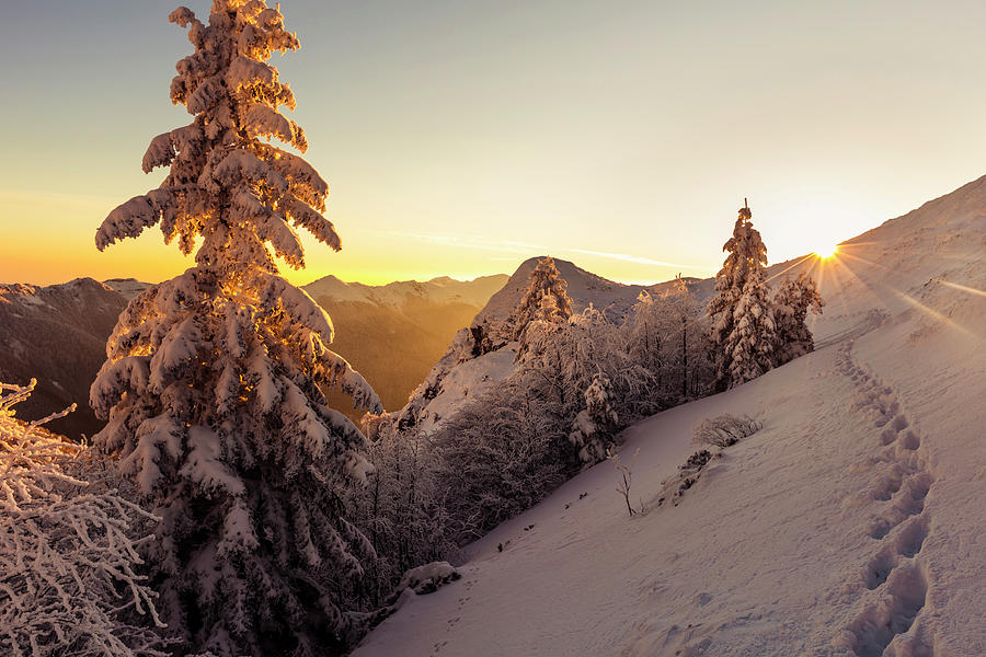 Golden Winter by Evgeni Dinev