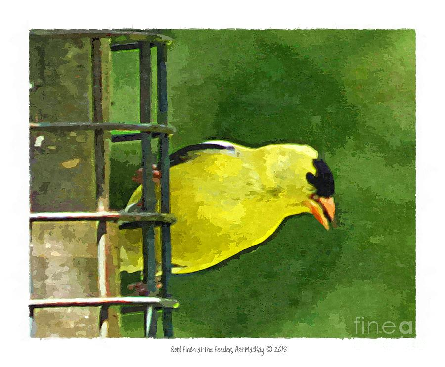Goldfinch at the Feeder by Art MacKay