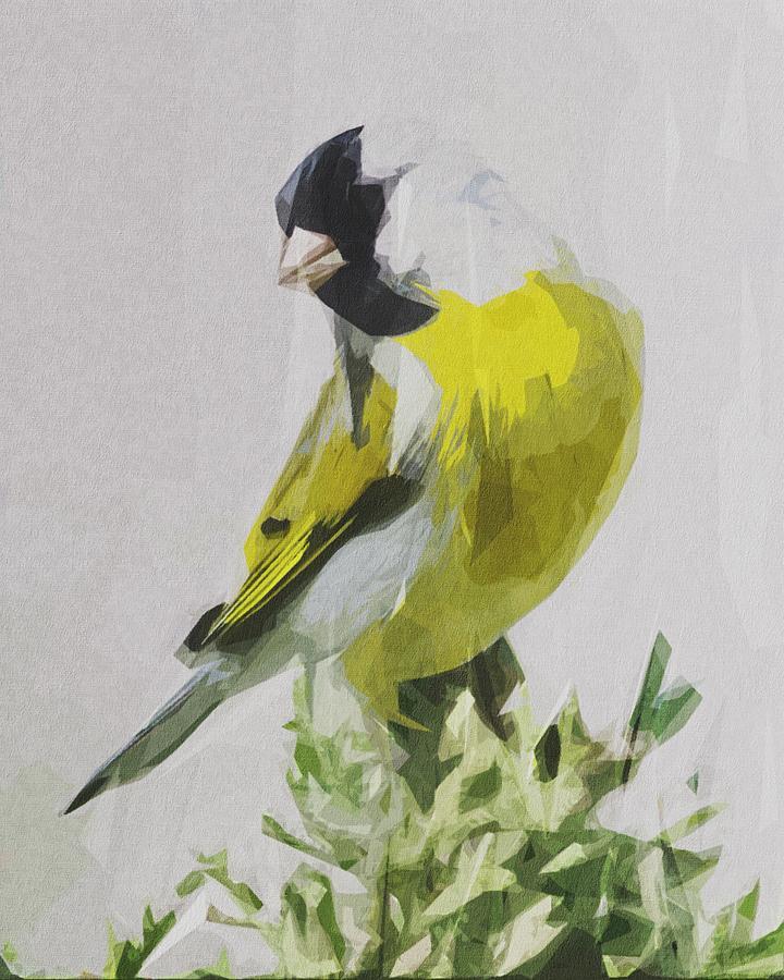 Goldfinch Bird Wildlife Nature