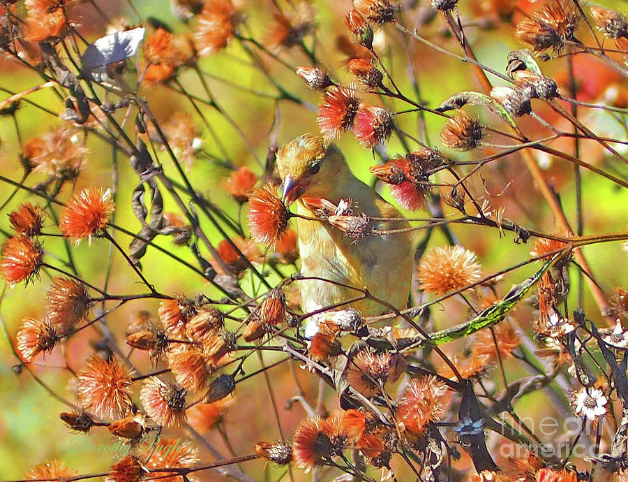 Goldfinch in Autumn by Dorothy Pugh