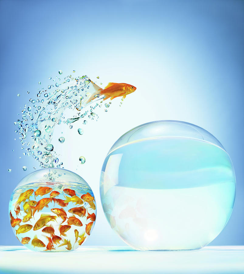 Goldfish Jumping Out Of Overcrowded Photograph by Gandee Vasan