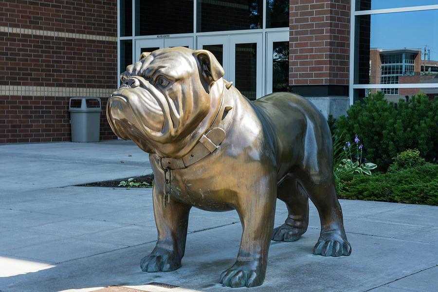 Gonzaga Bulldog by Tom Cochran