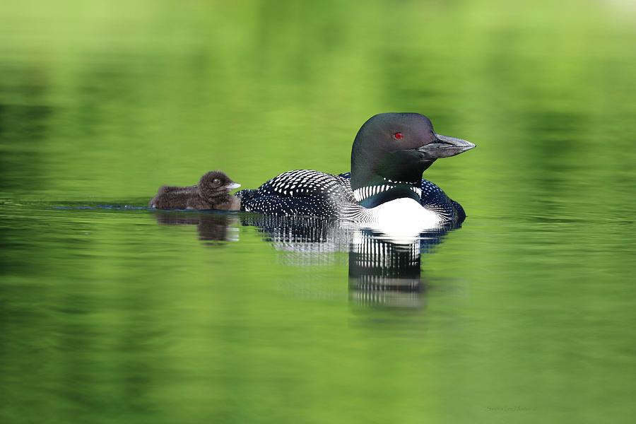 Good Morning Loon and New Chick by Sandra Huston