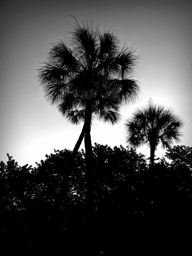 Good Morning Palms by Robert Stanhope