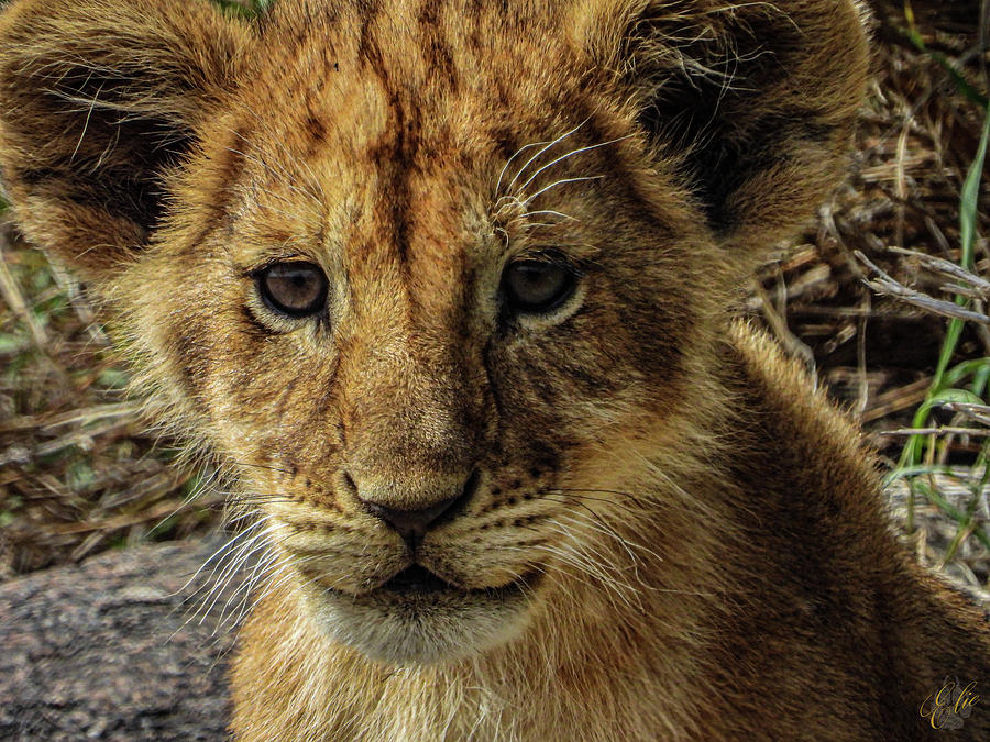 GOOD MORNING SIMBA by Elie Wolf