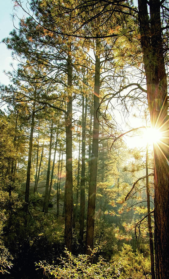 Good Morning Sunshine by ELAINE MALOTT