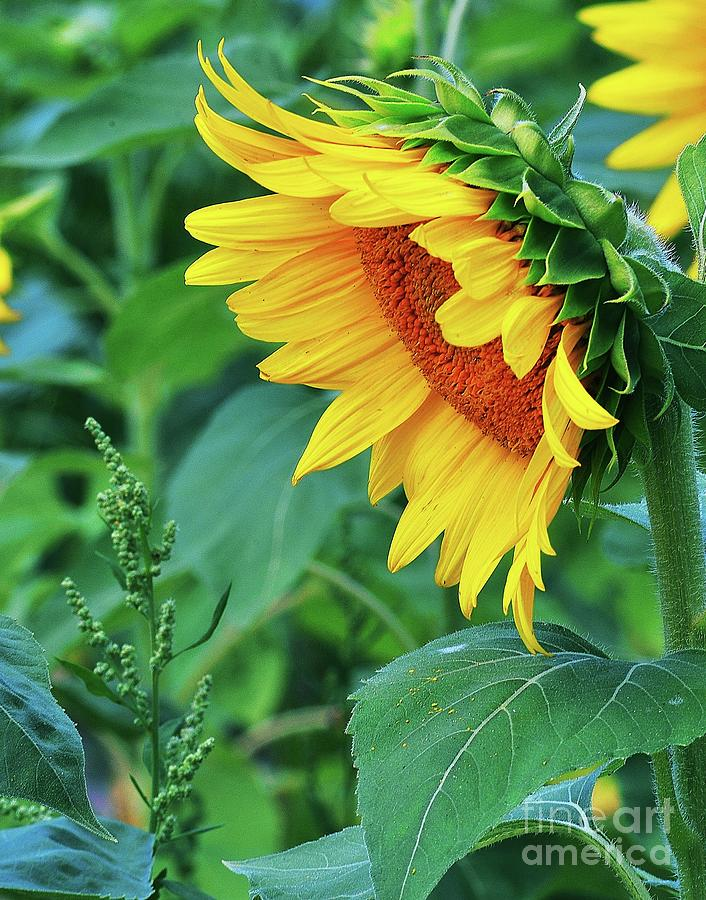 Good Morning Sunshine by Joseph Perno