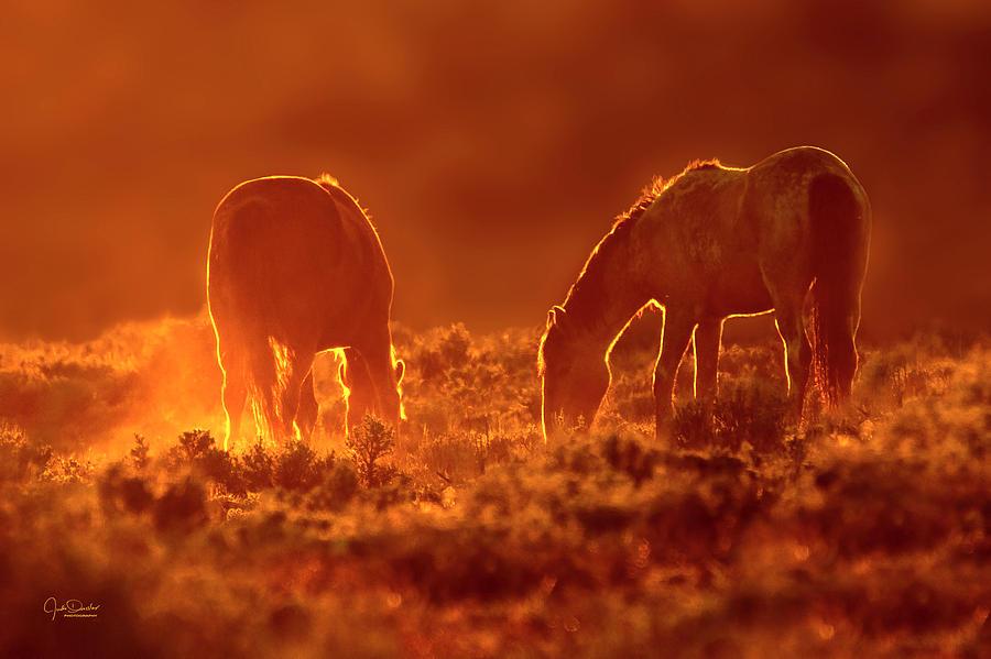 Good Night, Beautiful Mustangs by Judi Dressler