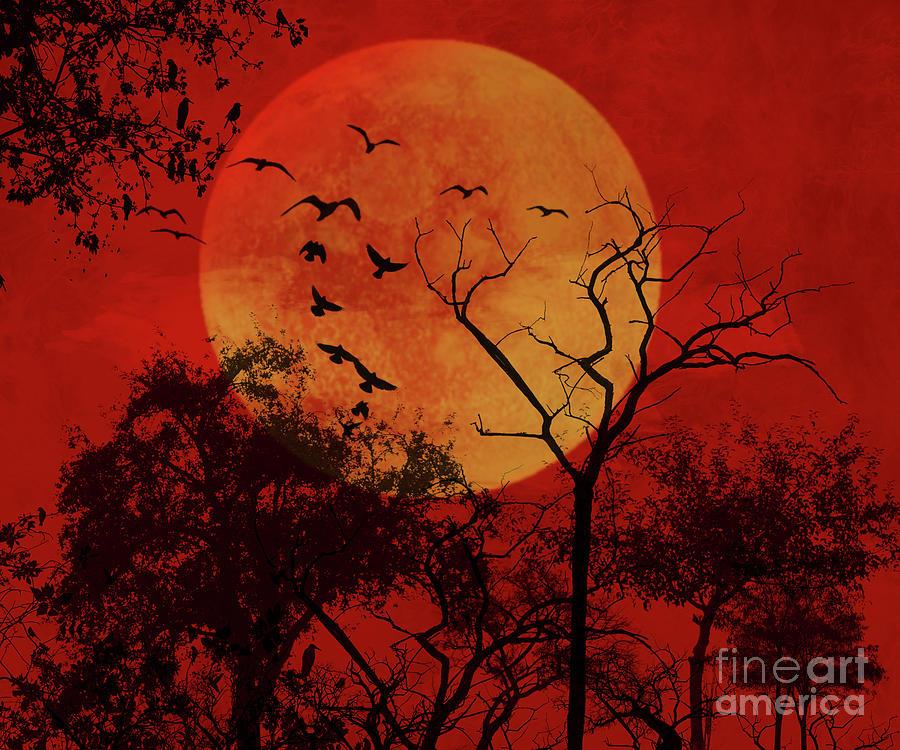 Good Night Birds by Carlos Diaz