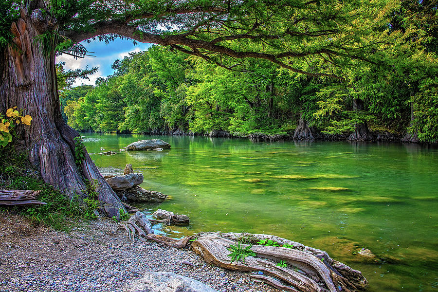 Gorgeous Greens on the Guadalupe by Lynn Bauer