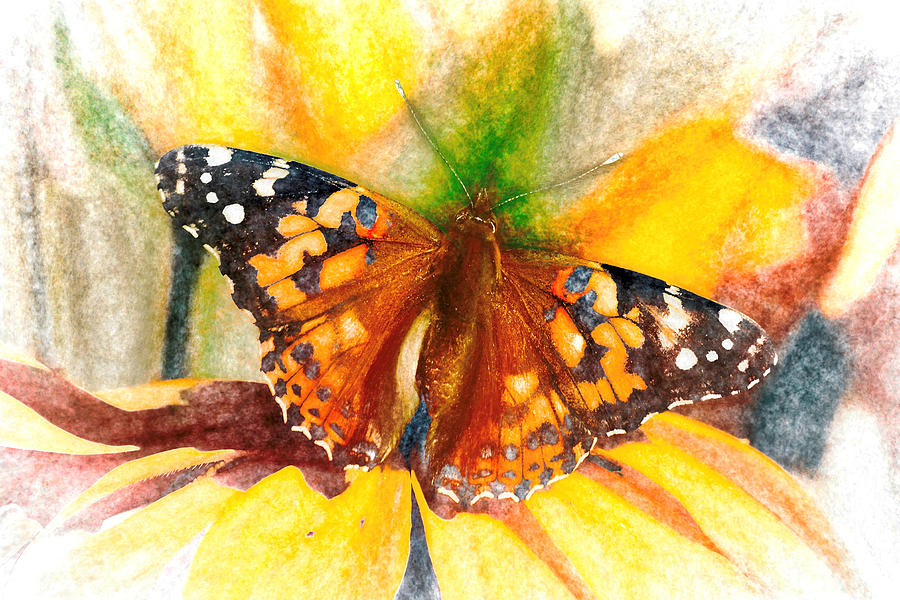 Gorgeous Painted Lady Butterfly by Don Northup