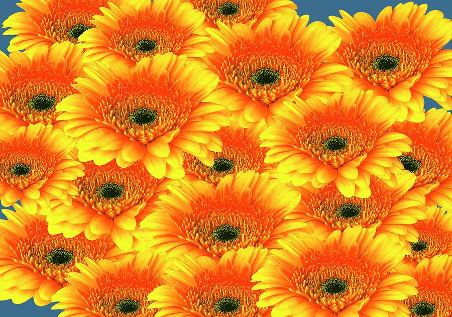 Gorgeous Yellow Orange Gerberas by Johanna Hurmerinta