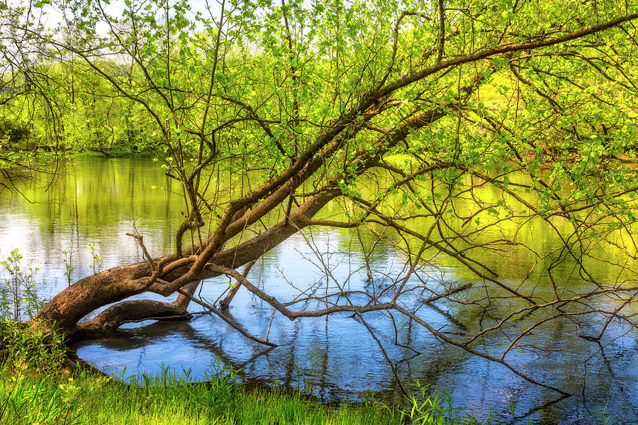 Carolina Photograph - Graceful Spring by Debra and Dave Vanderlaan