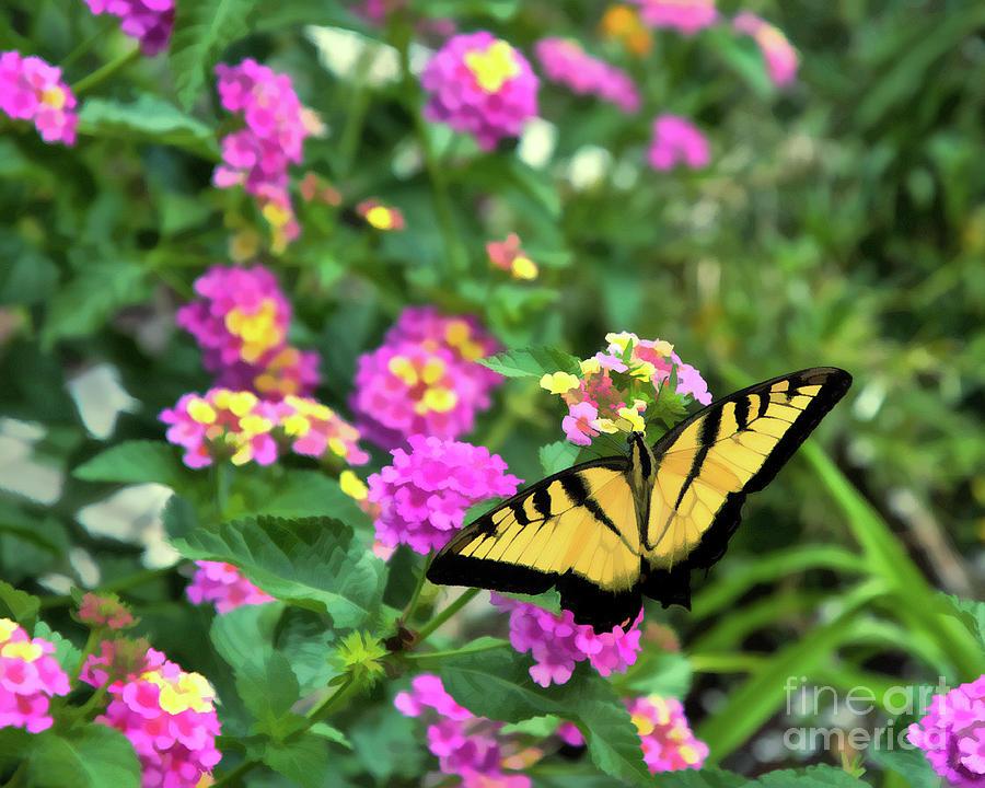 Nature Photograph - Graceful Swallowtail by Amy Dundon