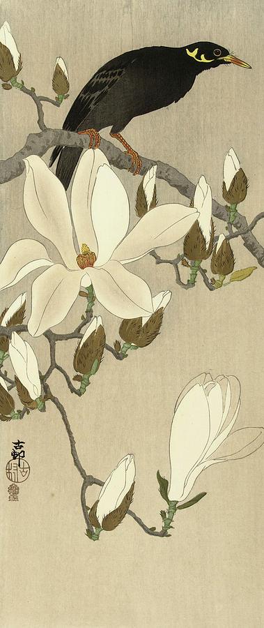 Flowering Painting - Gracula On Flowering Magnolia Branch, 1910 by Ohara Koson