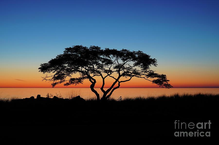 Graduated Sunrise Silhouette by Rachel Cohen