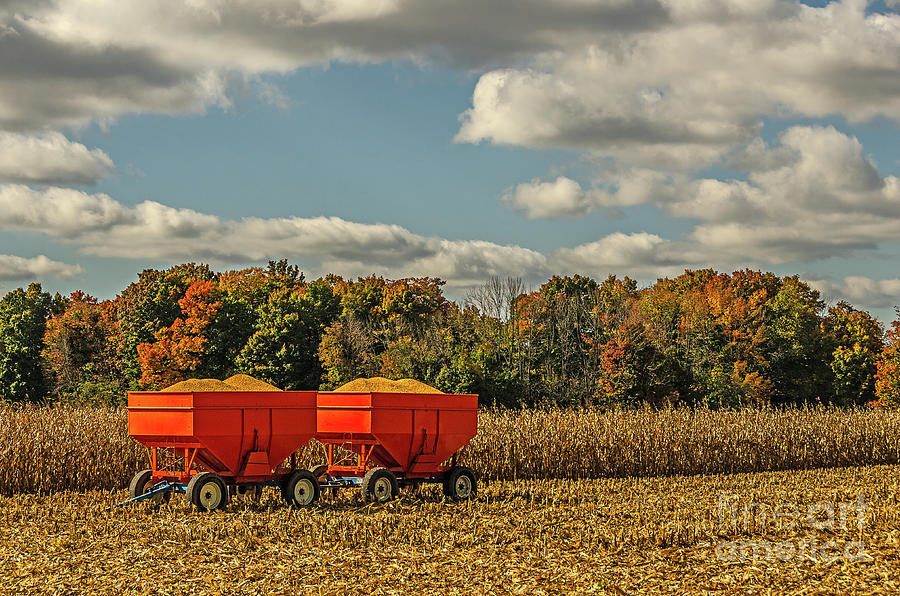 Grain Wagons Loaded With Maize by Sue Smith