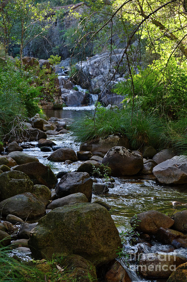 River Photograph - Gralheira River During Afternoon by Angelo DeVal