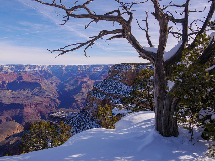Grand Canyon and Snow by Todd Bannor