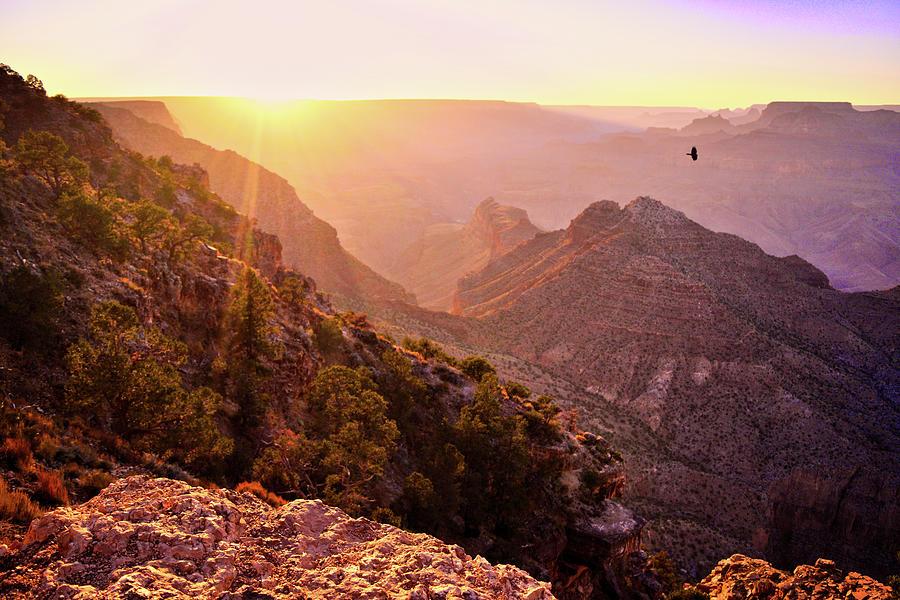 Grand Canyon Sunset Bird by Chance Kafka