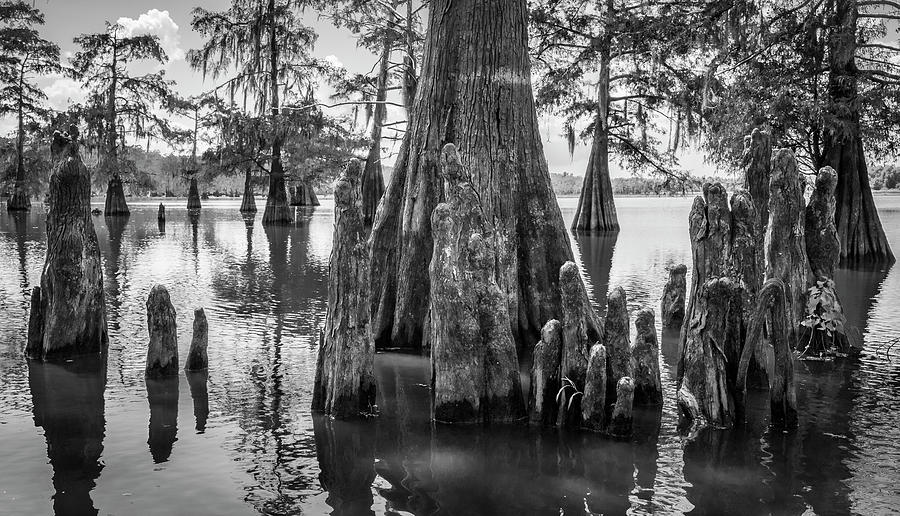 Grand Lake cypress by Andy Crawford