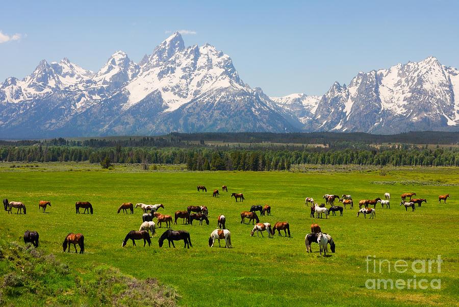 Usa Photograph - Grand Teton National Park by Andrew Zarivny