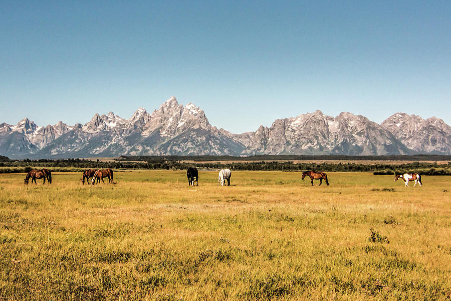 Grand Tetons View from Pasture by Dorothy Cunningham
