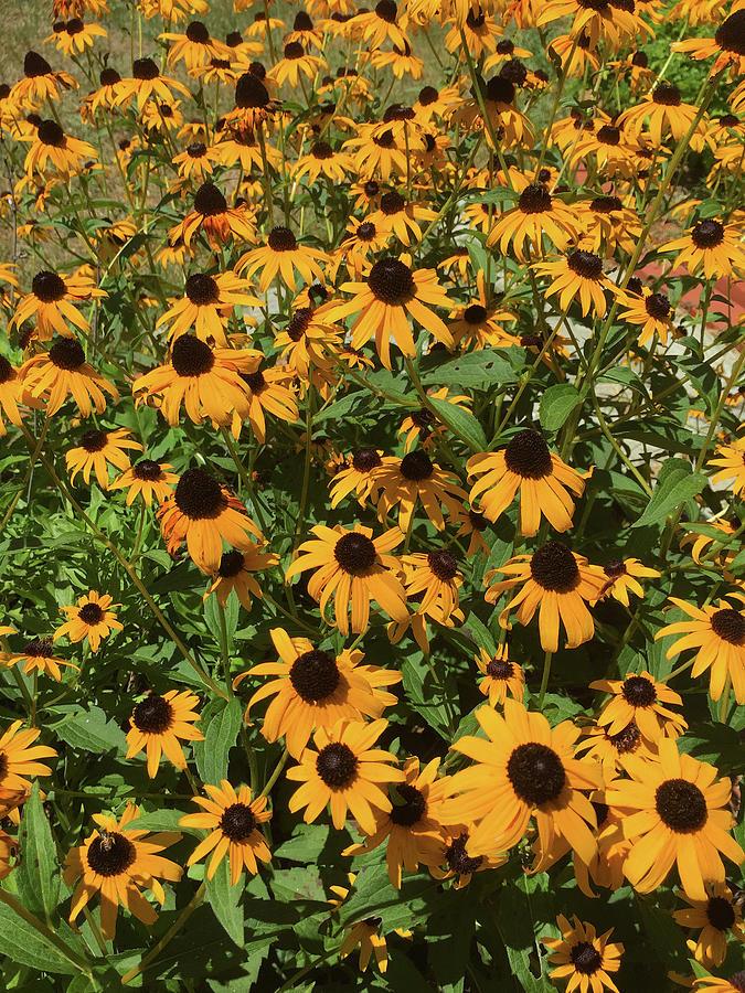 Grandmas Flower Garden by Matthew Seufer