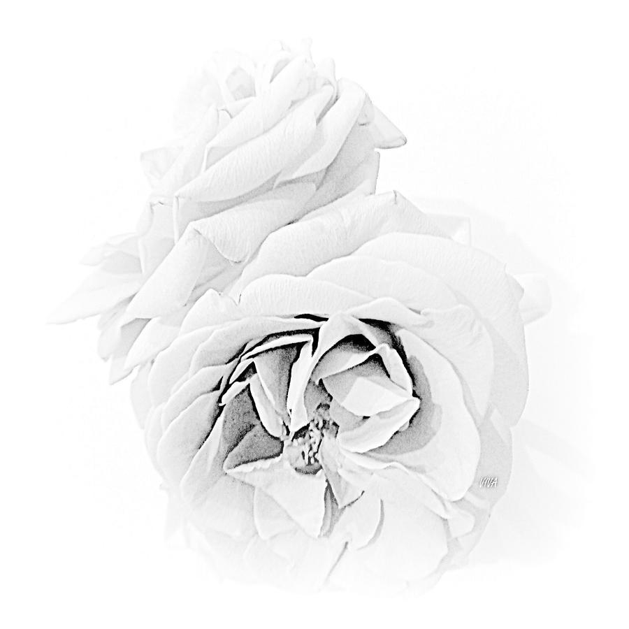 Grandmas Roses - B  -  W by VIVA Anderson