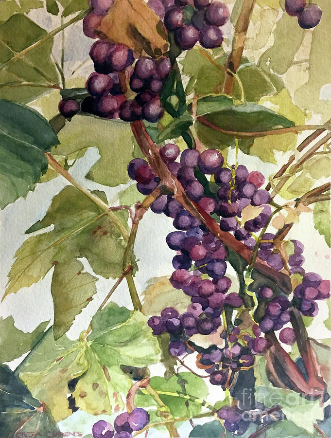 Watercolor of a Grapevine by Greta Corens
