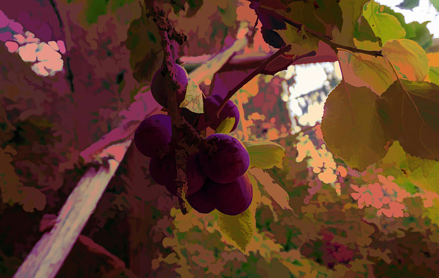 Grapes  by Cathy Anderson