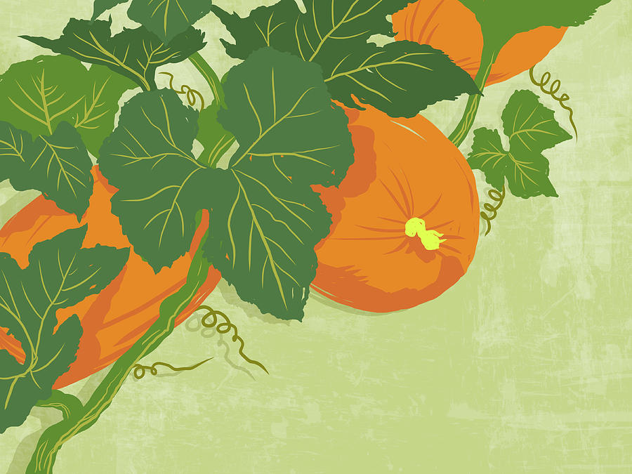 Graphic Illustration Of Pumpkins Digital Art by Don Bishop