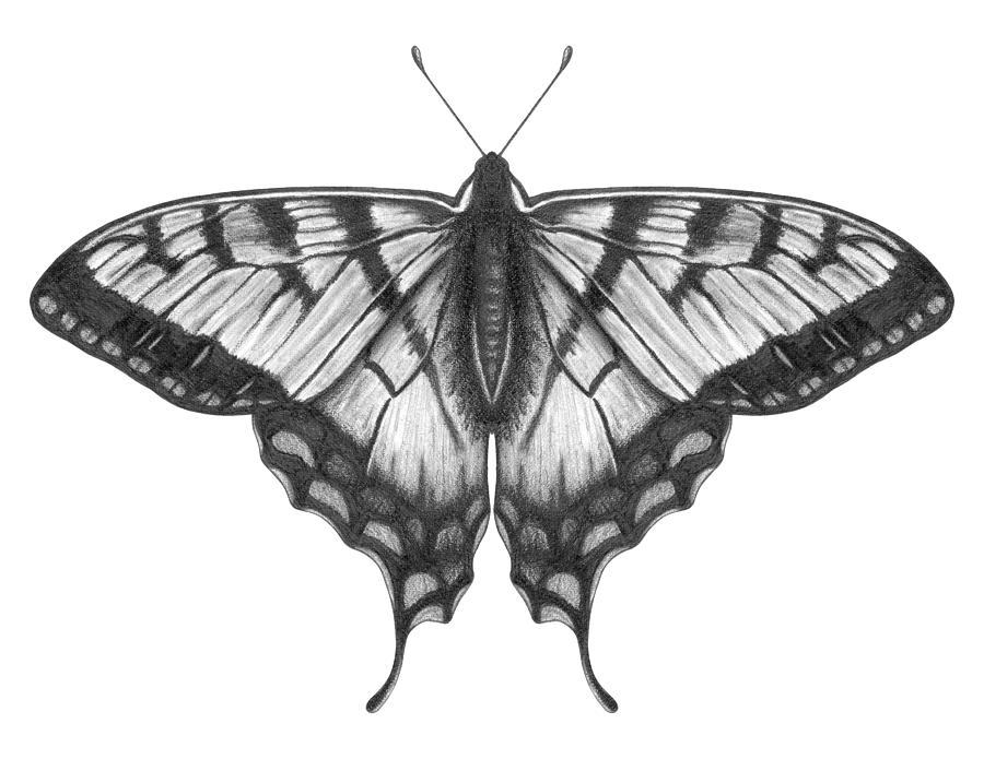 Graphite Illustration Of A Beautiful Digital Art by Ranplett