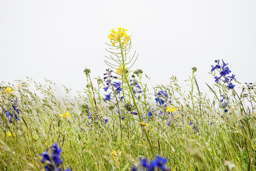 Grass and Flowers by Robert Potts