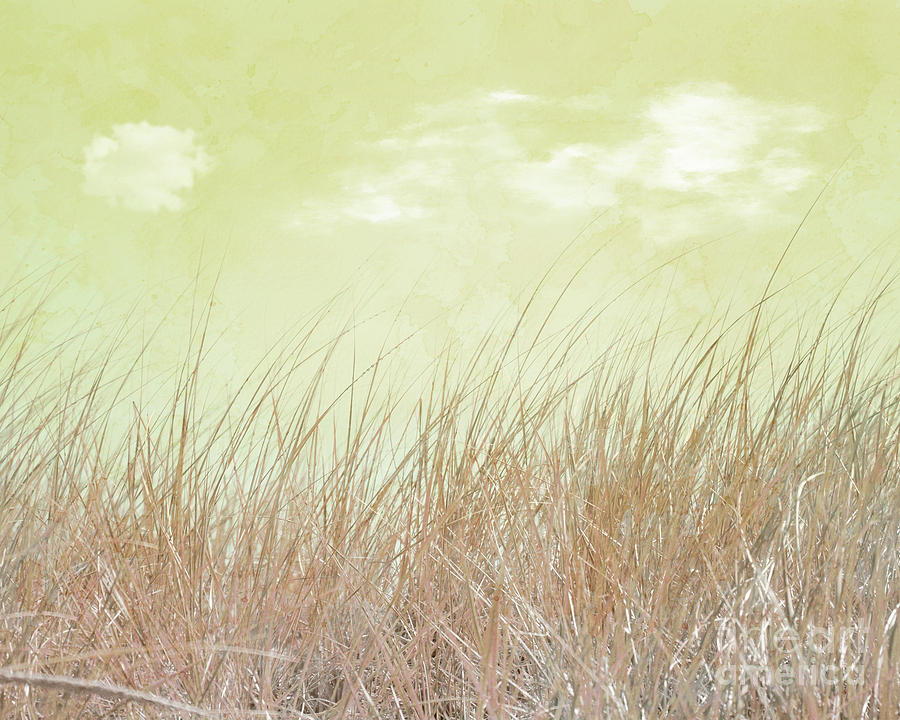 Grass and Sky 1 by Hal Halli
