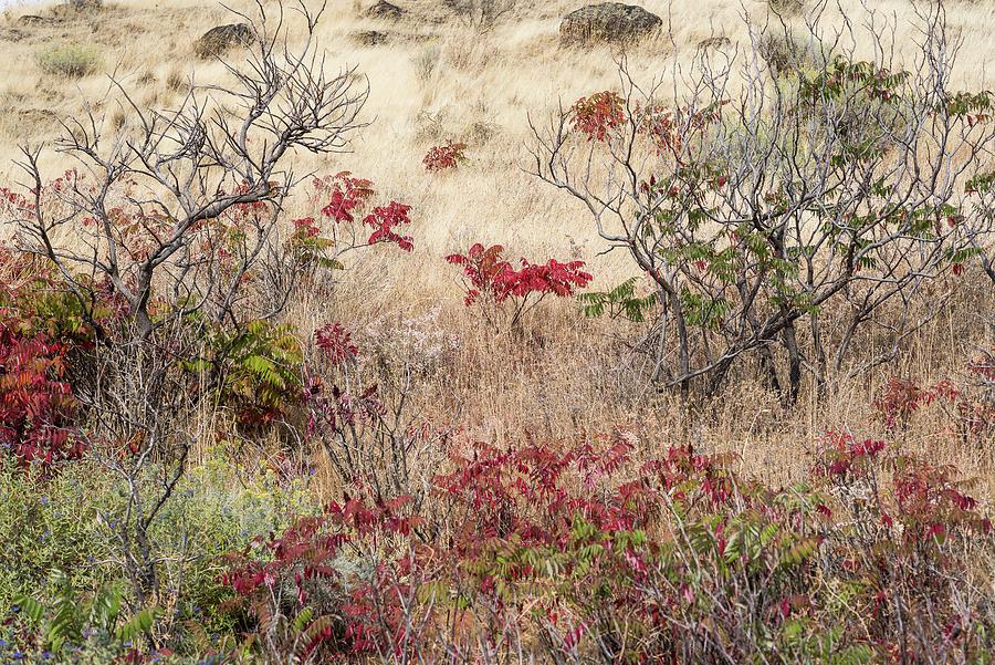 Grass and Sumac by Robert Potts