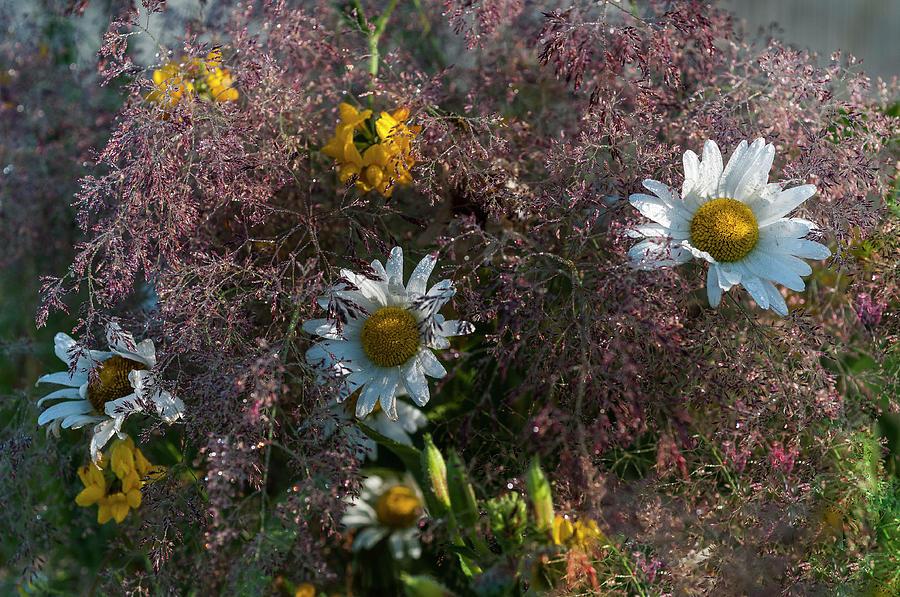 Grass, Daisy, Trefoil  by Robert Potts