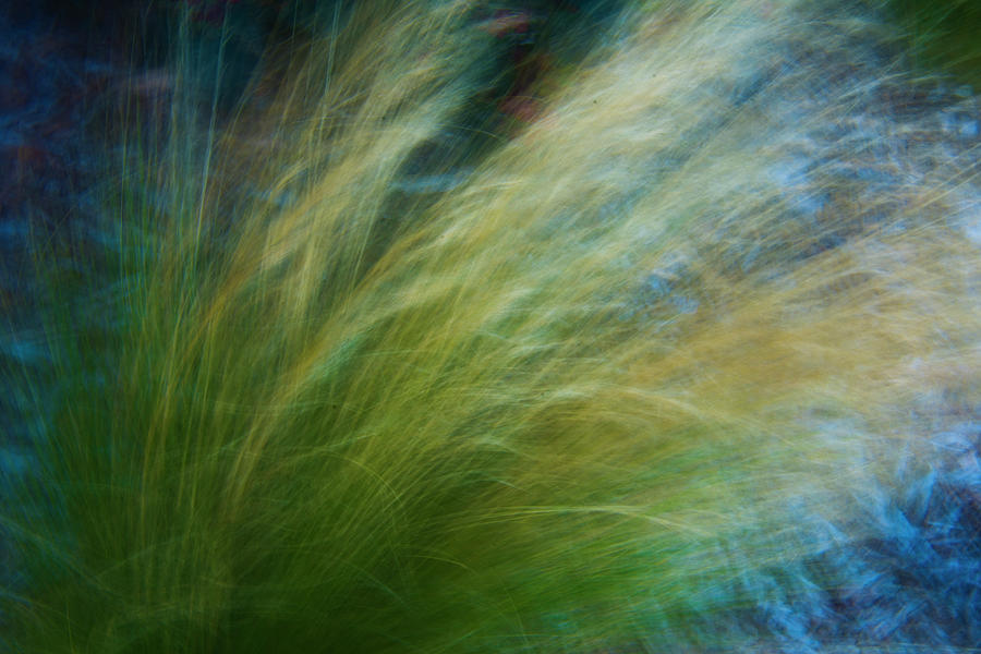 Green Tall Grass in the Wind by Yulia Kazansky