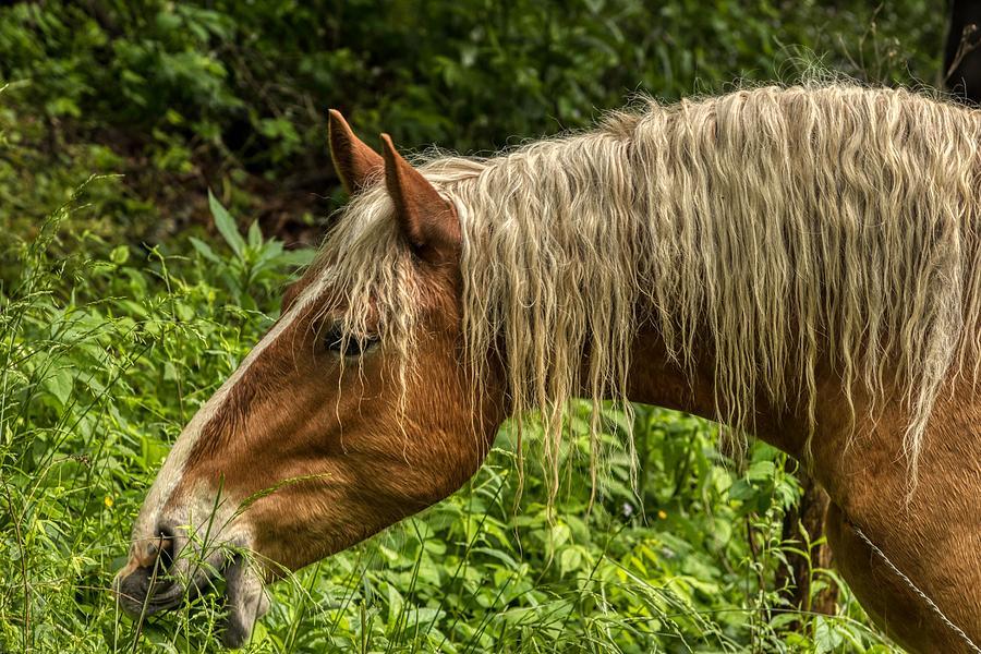 Grass is Greener by Dana Foreman