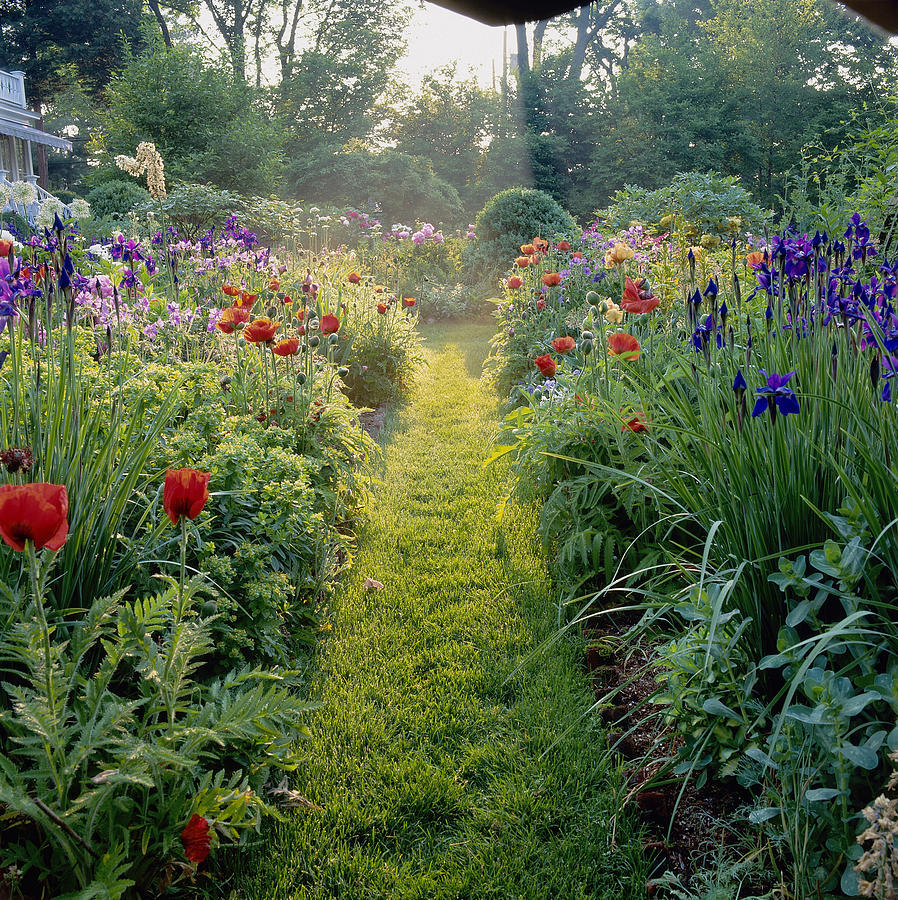 Grass Path With Perennial Border Photograph by Richard Felber