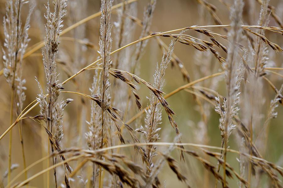 Grass Pattern by Robert Potts