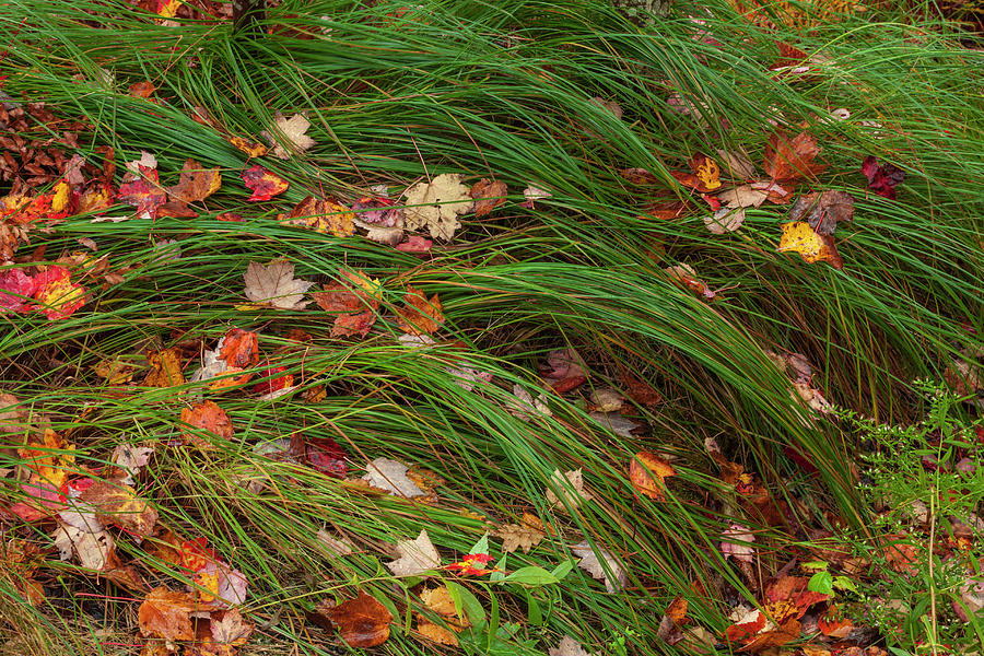 Grasses And Autumn Leaves, Sieur De Photograph by Jerry Whaley