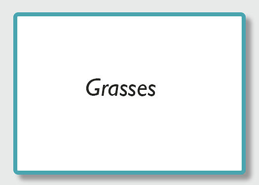 Grasses by Kathy Adams Clark