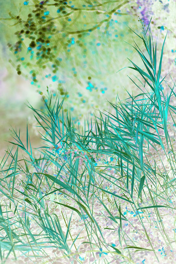 Grasses, Provence, France by Jean Gill