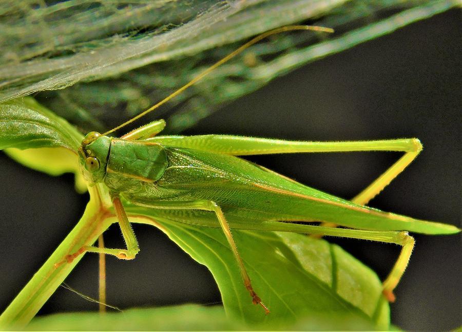 - Grasshopper under a spider web by - Theresa Nye